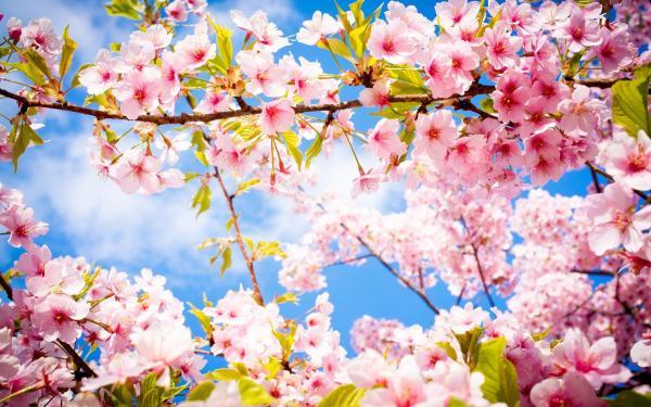 Comment faire des économies d'énergie au printemps